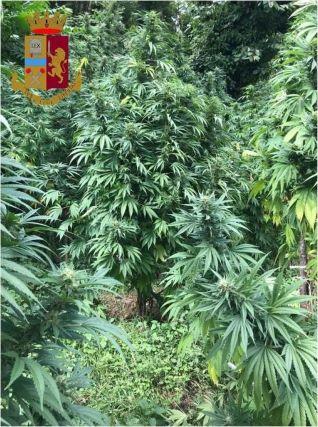 Lamezia Terme, piantagione canapa indiana scovata dalla Polizia di Stato