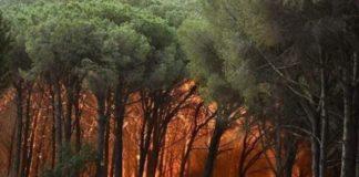 Pineta Siano incendio